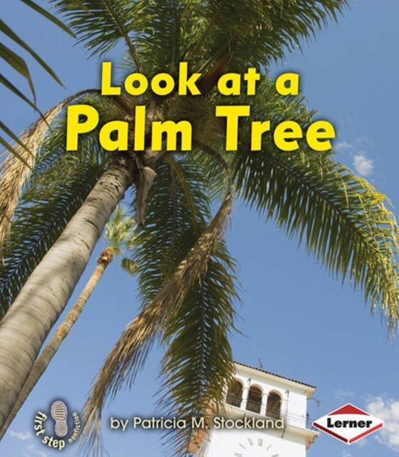 Look at a Palm Tree