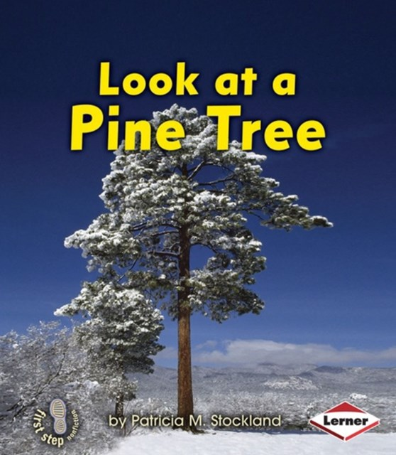 Look at a Pine Tree