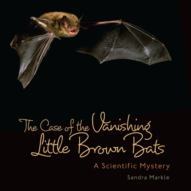 Case of the Vanishing Little Brown Bats