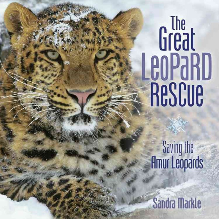 Great Leopard Rescue