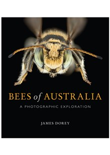 Bees of Australia by James Dorey (9781486308491) - PaperBack - Pets & Nature Wildlife