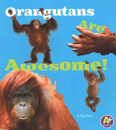 Orangutans Are Awesome!