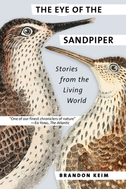 Eye of the Sandpiper