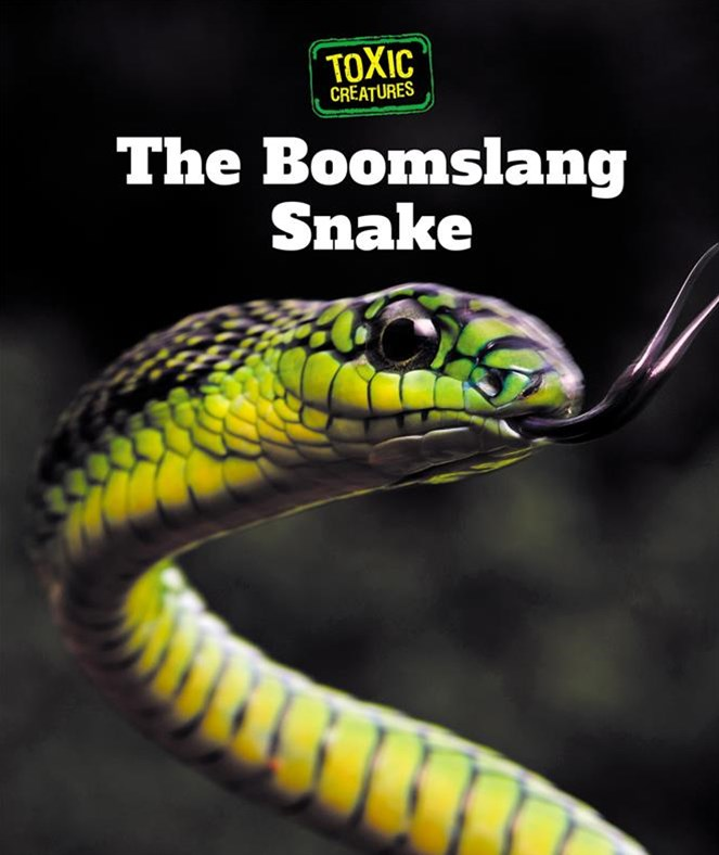 The Boomslang Snake