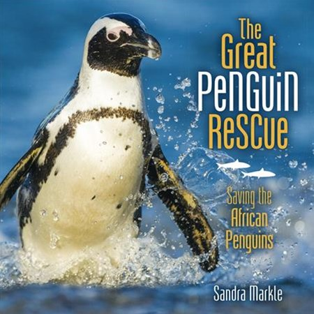 The Great Penguin Rescue Saving The African Penguins
