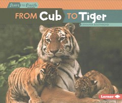 From Cub to Tiger - Start to Finish Cycles