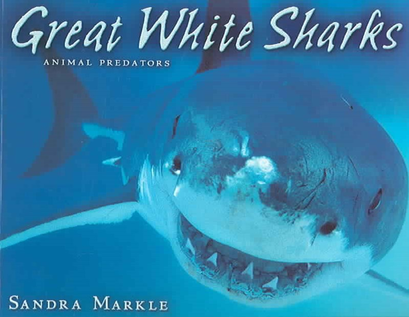 Great White Sharks