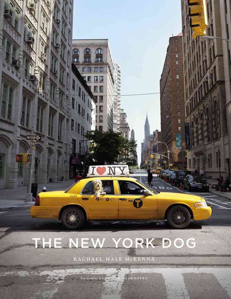 New York Dog