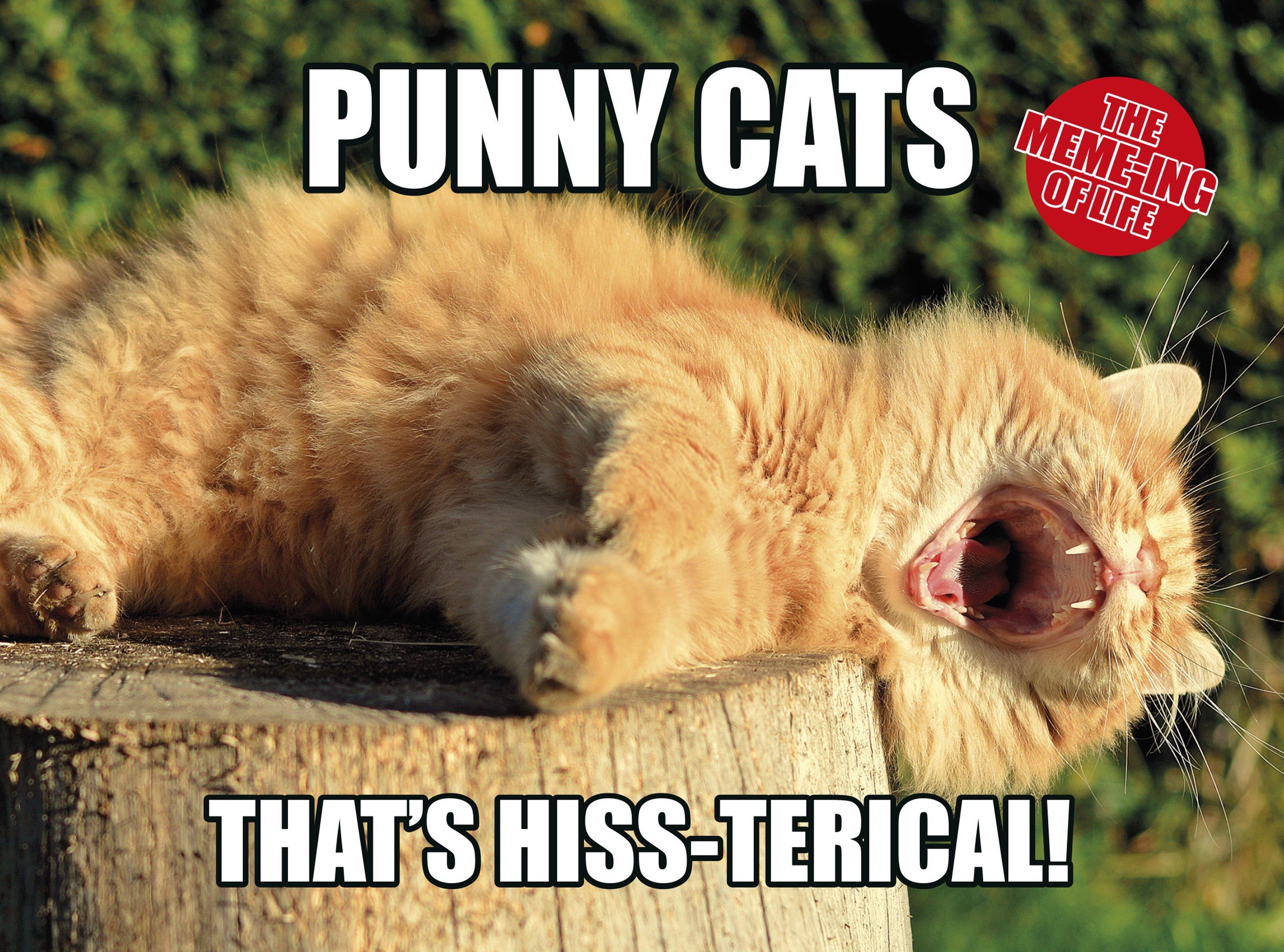 Meme-Ing of Life: Punny Cats: That's Hiss-Terical