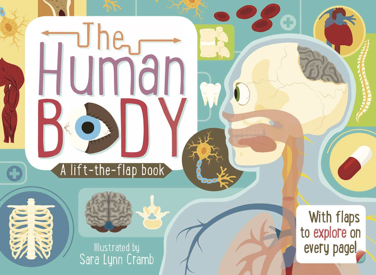 The Human Body: A Lift-the-Flap Book