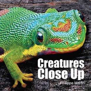 Creatures Close Up by GILLIAN WATTS, Philippe Martin (9781770857834) - HardCover - Non-Fiction Animals