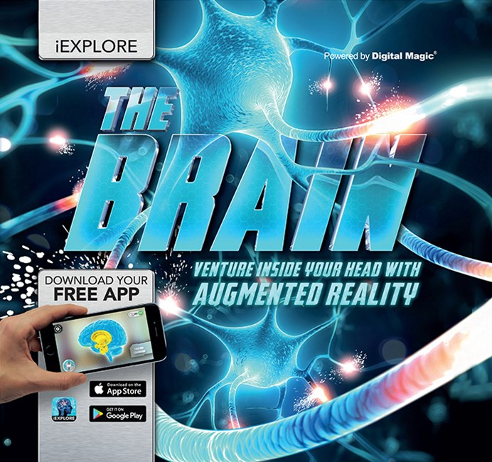 Iexplore the Brain