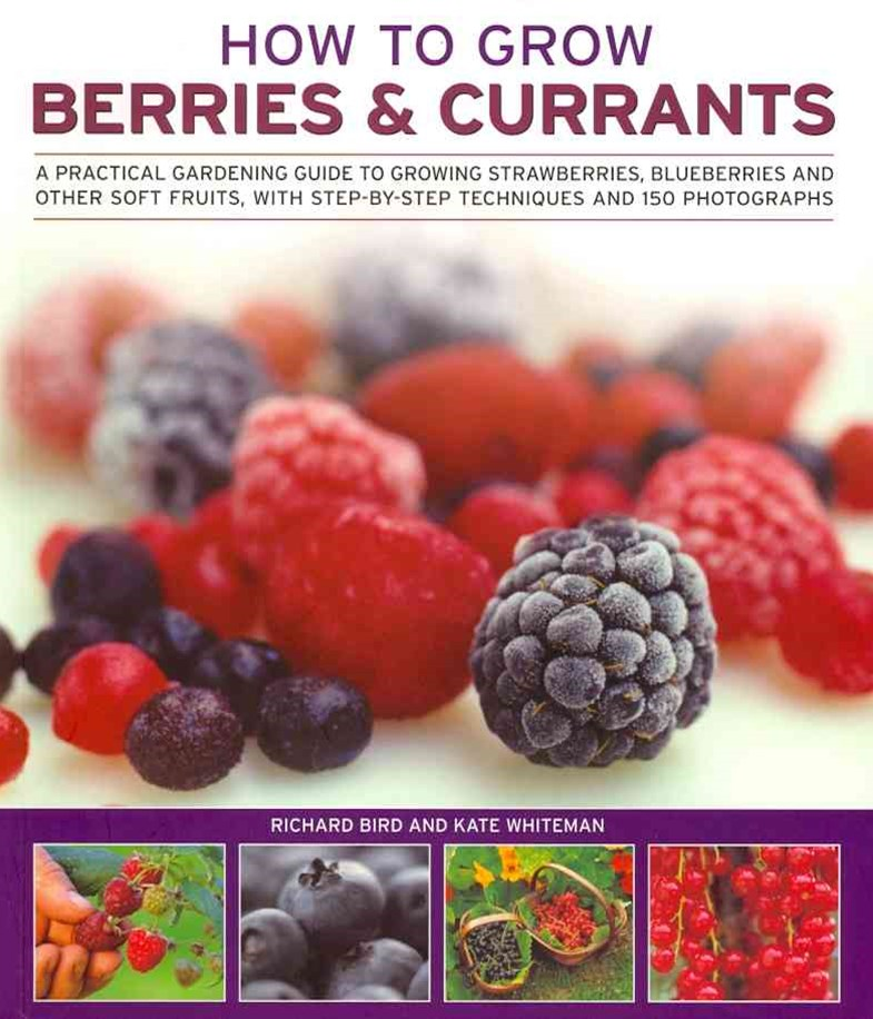 How to Grow Berries and Currants