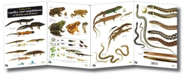 Guide to the Reptiles and Amphibians of Britain and Ireland
