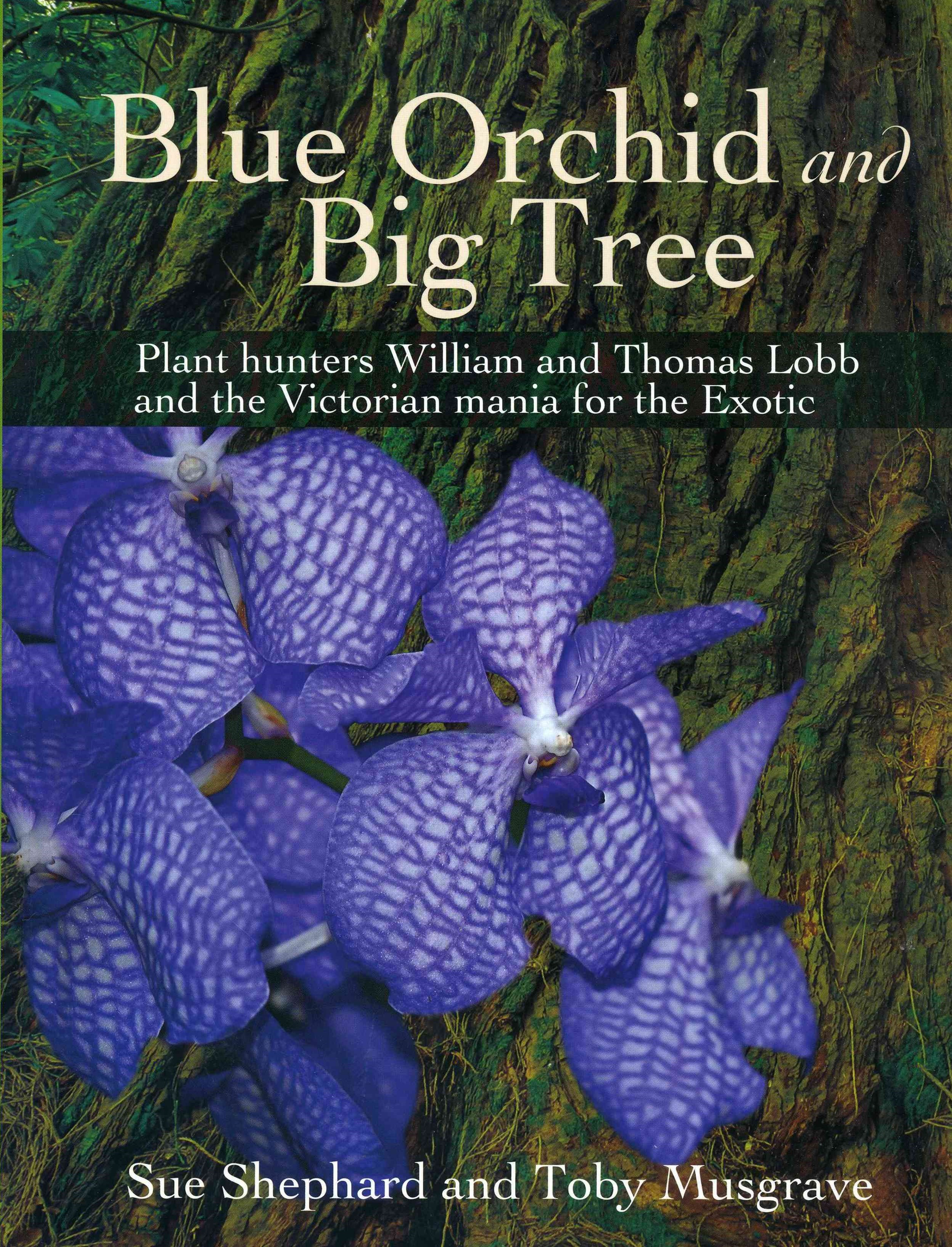 Blue Orchid and Big Tree