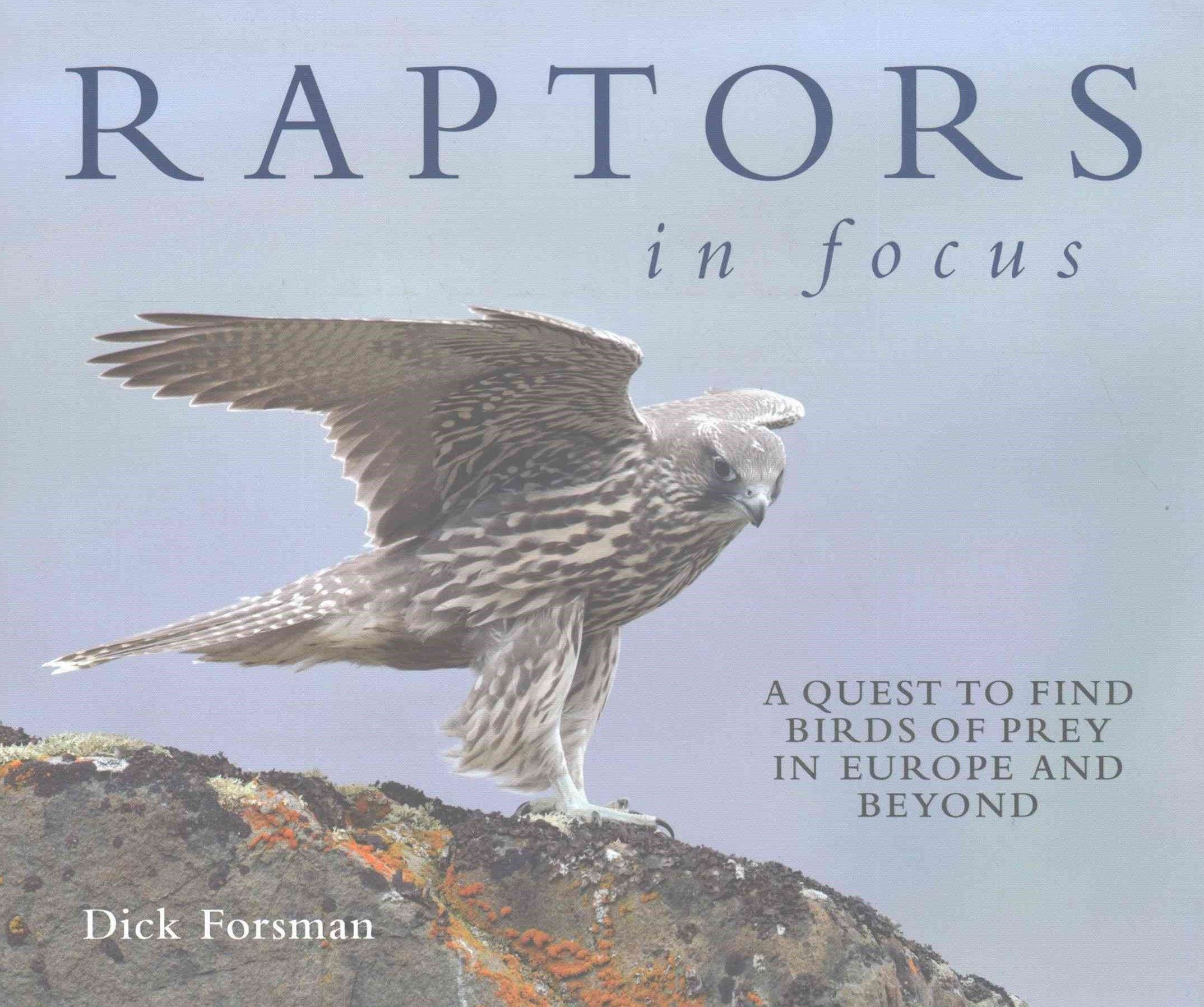 Raptor in Focus