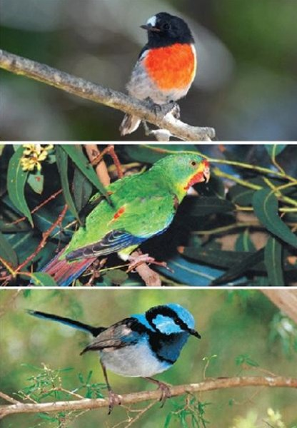 Birds of Tasmania